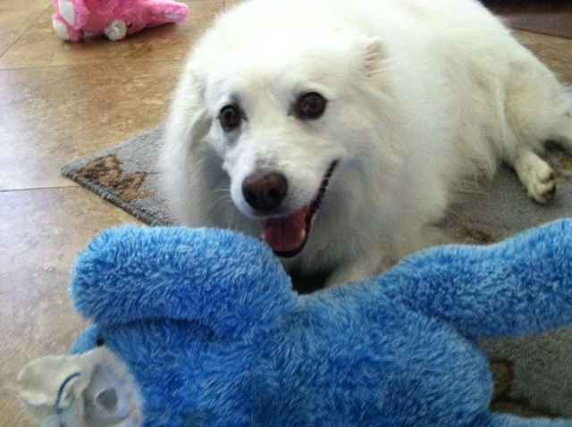Spinal Trap Back 2 Good - Sabadil Safe  Fast Relief Of Dog Allergies Update To This Page Added Below - Email Reply From Boiron, The Makers Of -9459